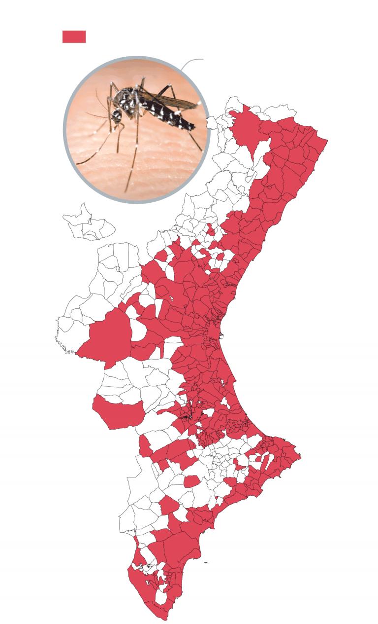 mosquito tigre en la comunidad valenciana